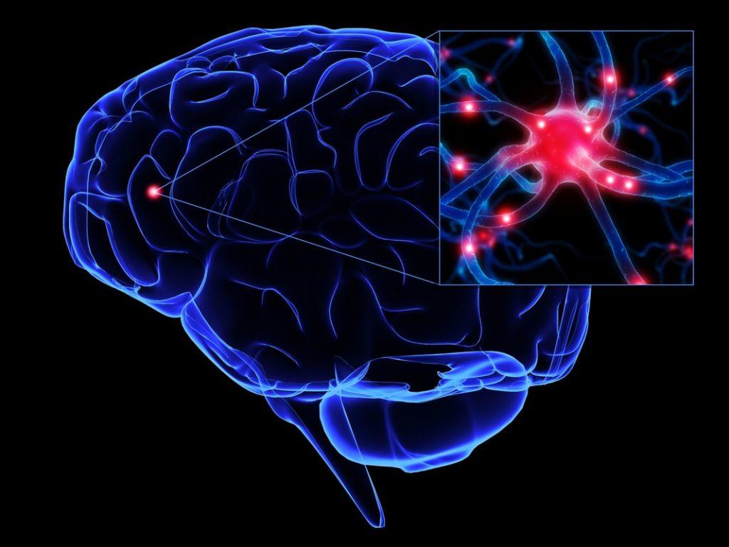 Synaptiske forbindelser
