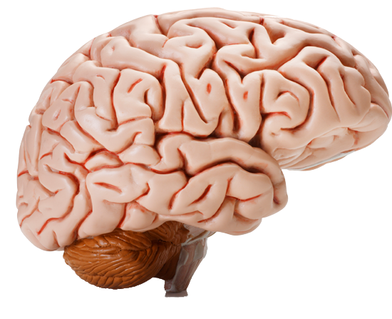 Stress «krymper» hjernen din — men meditasjon hjelper!