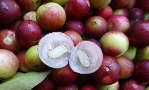 Camu Camu Bær